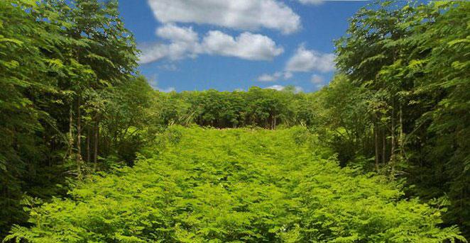 About Moringa World
