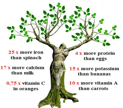 Moringa Slows Down The Aging Process