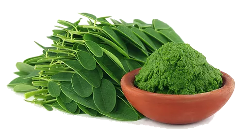 Moringa Shown To Have Anti-Cancer Effects
